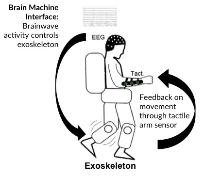 EEG brain training to control bionic legs V3